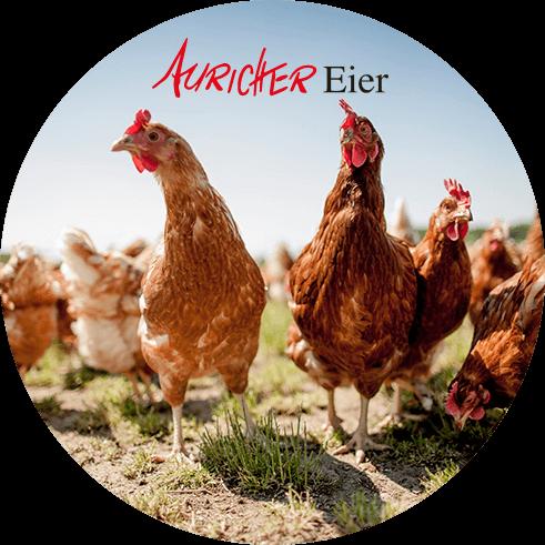 Lieferant Auricher Eier